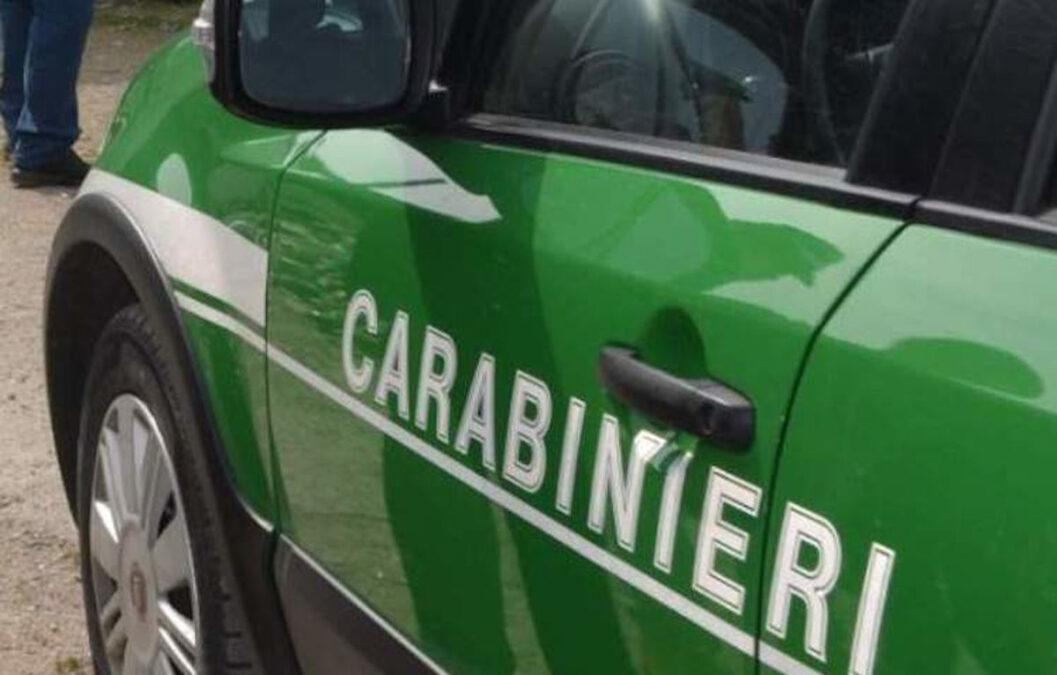 Carabinieri Forestali vettura 2